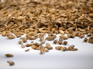 Cosses d'épeautre de qualité bio et issues de l'agriculture locale.